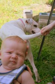 dog flatulence