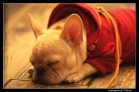 http://www.organic-pet-digest.com/image-files/dog-health-vomit-1.jpg