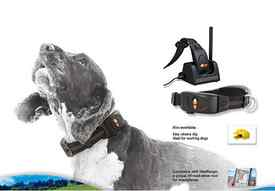 dog tracking collars