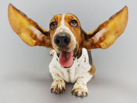 Home Remedies For Bacterial Infection In Dogs Ears