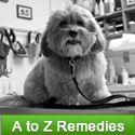 Dog Remedies