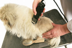 learn dog grooming styles