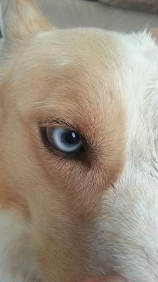 Lucky's Healthy Right Eye