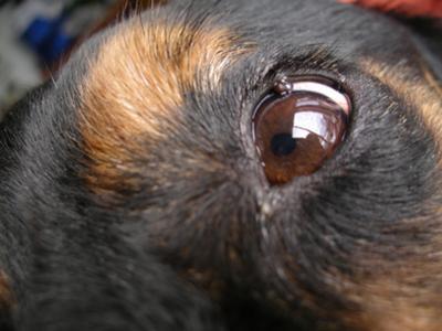 Shayna's eye