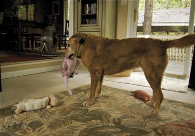 Dog Licking Floor - Inhaled Allergens
