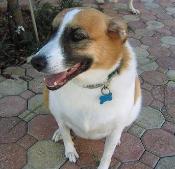 Alternative medicine for dog arthritis