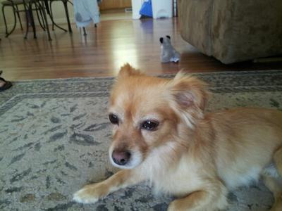 Normal photo (before dog swollen eyelids)