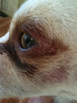 Obi's Eye
