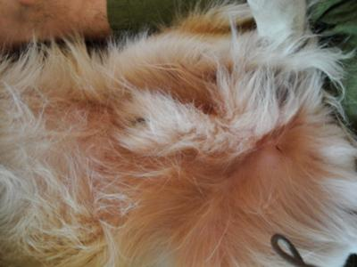 ... www.organic-pet-digest.com/fungus-on-dogs-belly-rash-around-groin.html