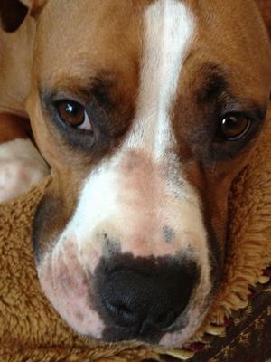 Bella's Snout
