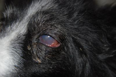 Photo of Dog Eye Problem