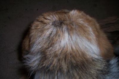 spot on head