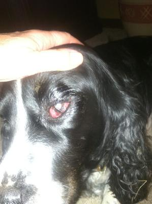 Holding Josie's eye open after wiping discharge