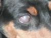 Ula's eyes
