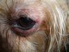 her swollen eye