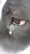 Other eye