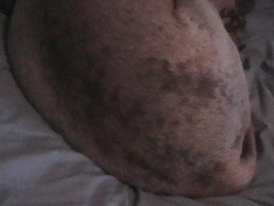 My Dog Has Black Spots On His Skin